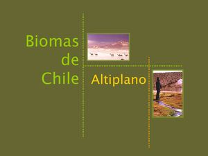 Bioma Altiplano