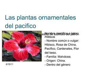 Calam o las plantas ornamentales del pacifico for Plantas ornamentales nombres
