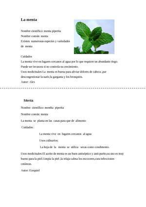 Calam o fichas tematicas sobre plantas arom ticas - Fichas de plantas para ninos ...