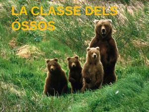 La Classe Dels ÓSsos