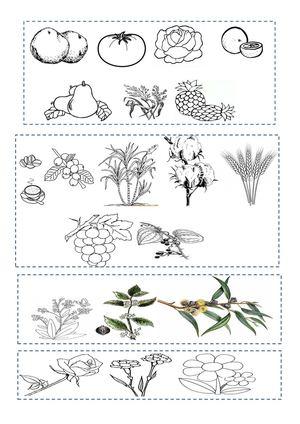 Calam o utilidad de la planta for Utilidad de las plantas ornamentales