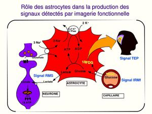 imagerie cerebrale en psychologie cognitive cours 8