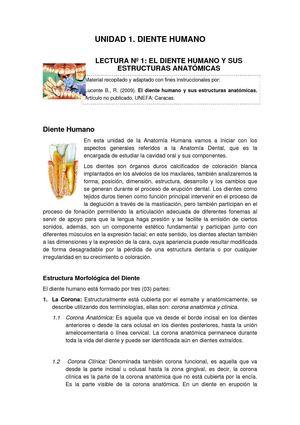 Calaméo - El diente humano y sus estructuras anatómicas