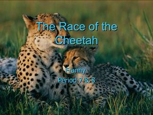 The Race of the Cheetah by Franny