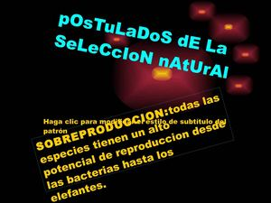 postulados de la seleccion natural