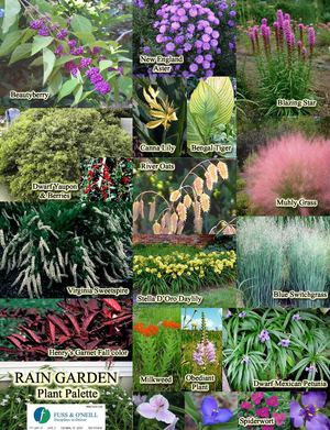 SC Plants for your Rain Garden