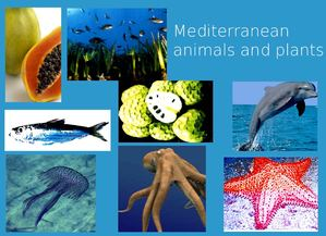 Mediterranean animals and plants