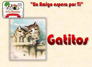 Catalogo Gatos