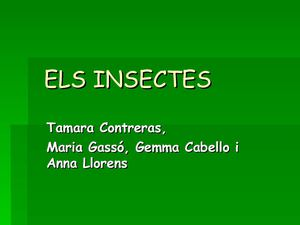 POWERPOINT SOBRE INSECTES
