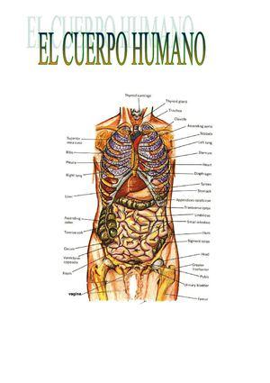 Calaméo - EL CUERPO HUMANO-ROBERTO
