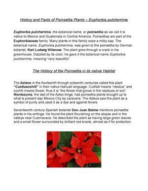 Calameo History And Facts Of Poinsettia Plants Euphorbia Pulcherrima