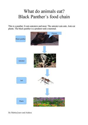 FOOD CHAIN 5A