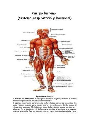 Calaméo - cuerpo humano (sistema respiratorio y hormonal)