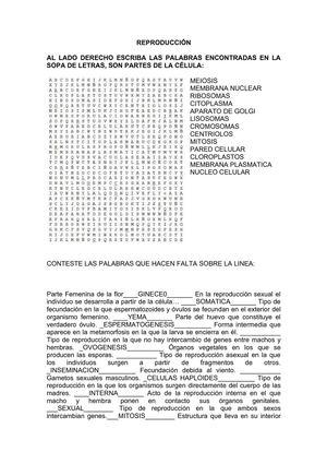 calam233o sopa de letras y preguntas reproducci211n s201ptimo 1