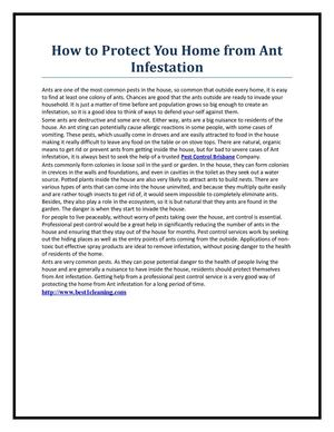How to Protect You Home from Ant Infestation