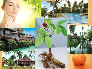 Enjoy Great Health with Siddha and Ayurveda in South India