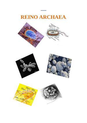 Reino De Las Arqueo Bacteria