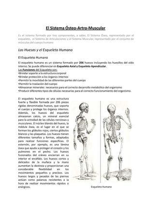 Calaméo El Sistema ósteo Artro Muscular