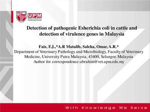 Detection of pathogenic Esherichia coli in cattle and detection of virulence genes in Malaysia