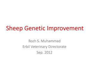 Sheep Genetic Improvement