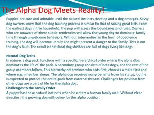 The Alpha Dog Meets Reality!