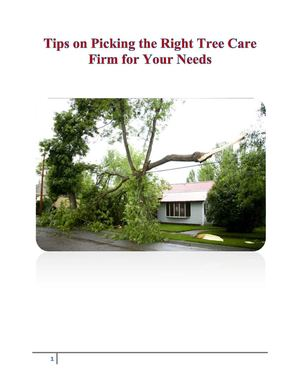 Tips on Picking the Right Tree Care Firm for Your Needs