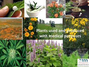 Plants used for medical purposes - by Marta Veiga 11CT1.pdf