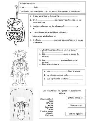Calaméo - Examen: Sistemas del cuerpo Humano