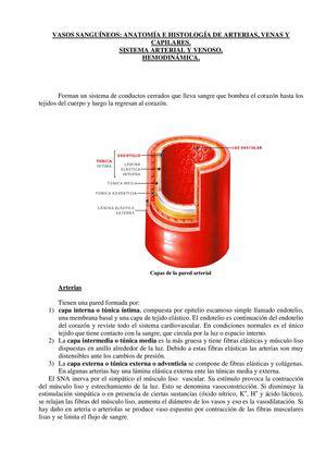 Calaméo - Anatomía y Histología de las arterias y Venas