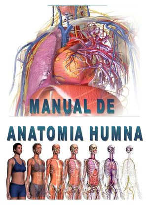 Calaméo - Manual de anatomia humana Edwin Ambulódegui