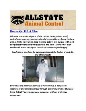 Allstate Animal Control : Animal Mice Removal Tips