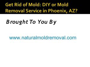 Get Rid of Mold: DIY or Mold Removal Service in Phoenix, AZ?
