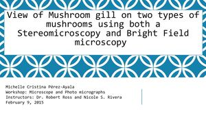 Mushroom Gill Using Stereomicroscopy Collage