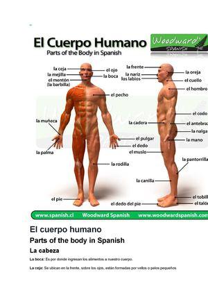 Calaméo - El Cuerpo Humano