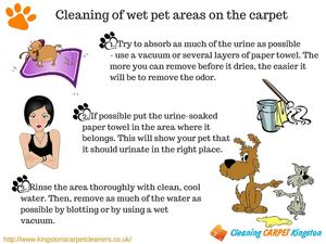 Cleaning Of Pet Stains In Carpet