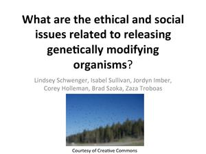 What are the ethical and social issues related to releasing genetically modifying organisms?