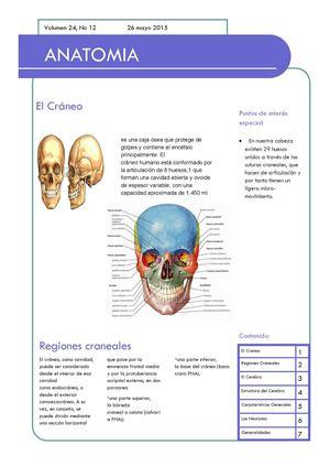 Calaméo - Anatomia (1)