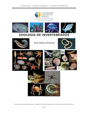 Calaméo - Zoología Invertebrados Completa
