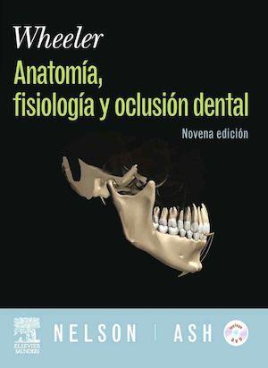 Calaméo - Anatomia Fisiologia Y Oclusion Dental