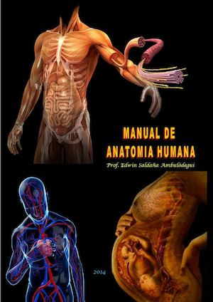 Calaméo - Manual De Anatomia Humana 2015 By Edwin Ambulodegui