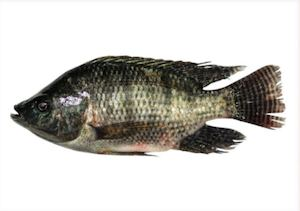 Fisherfarms Frozen Tilapia Is Available At Your Nearest Leading Supermarket 86443