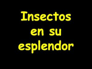 Power De Insectos C Naturales