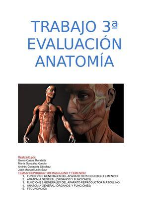 Calaméo - Anatomía 3ª evaluación