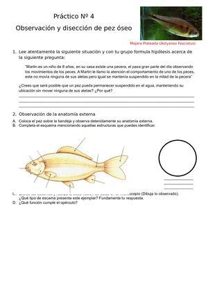 Calaméo - Práctico Nº 4 Diseccion De Pez Oseo