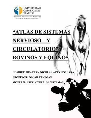 Atlas Sistema Nervioso Y Sistema Circulatorio