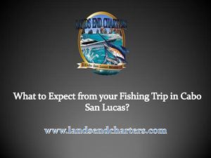 What To Expect From Your Fishing Trip In Cabo San Lucas