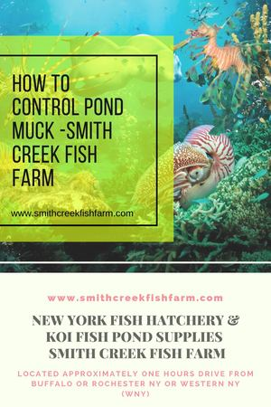 How To Control Pond Muck Smith Creek Fish Farm