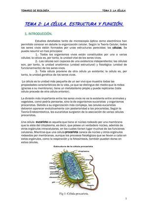 Calaméo La Celula Estructura Y Funcion