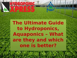 Hydroponics, Aquaponics Which One Is Better