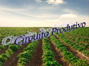 Ciruitos Productivos